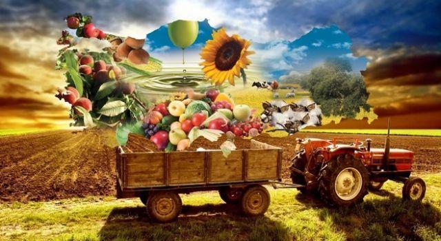 TÜİK: bitkisel üretim azalacak