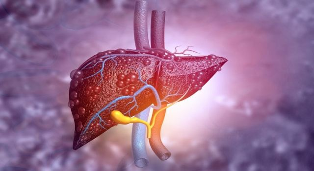Karaciğeri koruyan mucize! Yedikçe tüm bağışıklığınızı yeniliyor